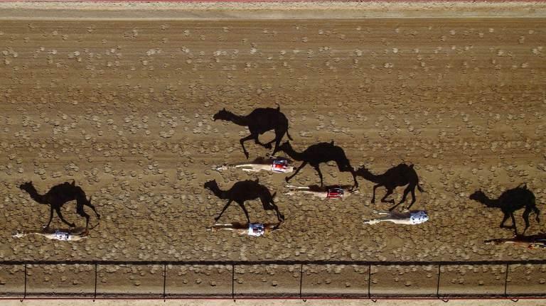 camel-racing-drone-uae-dubai